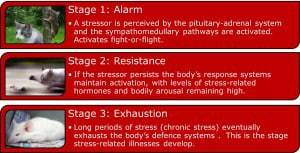 Seyle's Adrenal Fatigue diagram