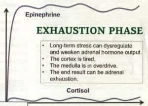 Seyle's Adrenal Fatigue