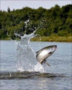 flopping fish