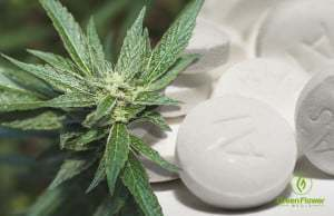 OPIOID PAIN KILLERS vs CANNABIS: A Real No Brainer!