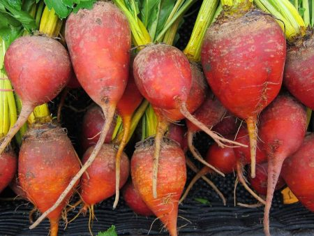 beets-944596_1920